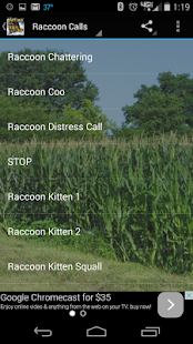 Raccoon Calls HD - screenshot