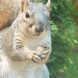 squirrel  by Norma Okun - Animals Other (  )