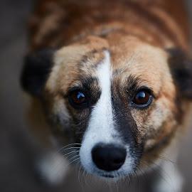 :) by Cristian Nicola Foto - Animals - Dogs Portraits
