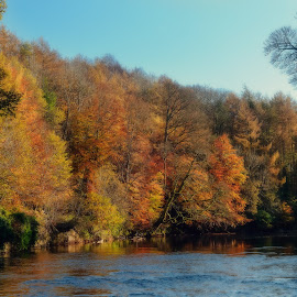 River Ayr Walk by Stephen Crawford - Landscapes Waterscapes