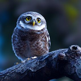 My Eyes On You  by Rahul Chakraborty - Animals Birds (  )