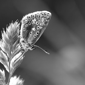 *** by Tracey Dobbs - Black & White Macro ( butterfly, macro, black and white, macro photography )