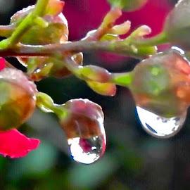 Reflections by Bill Martin - Nature Up Close Natural Waterdrops (  )
