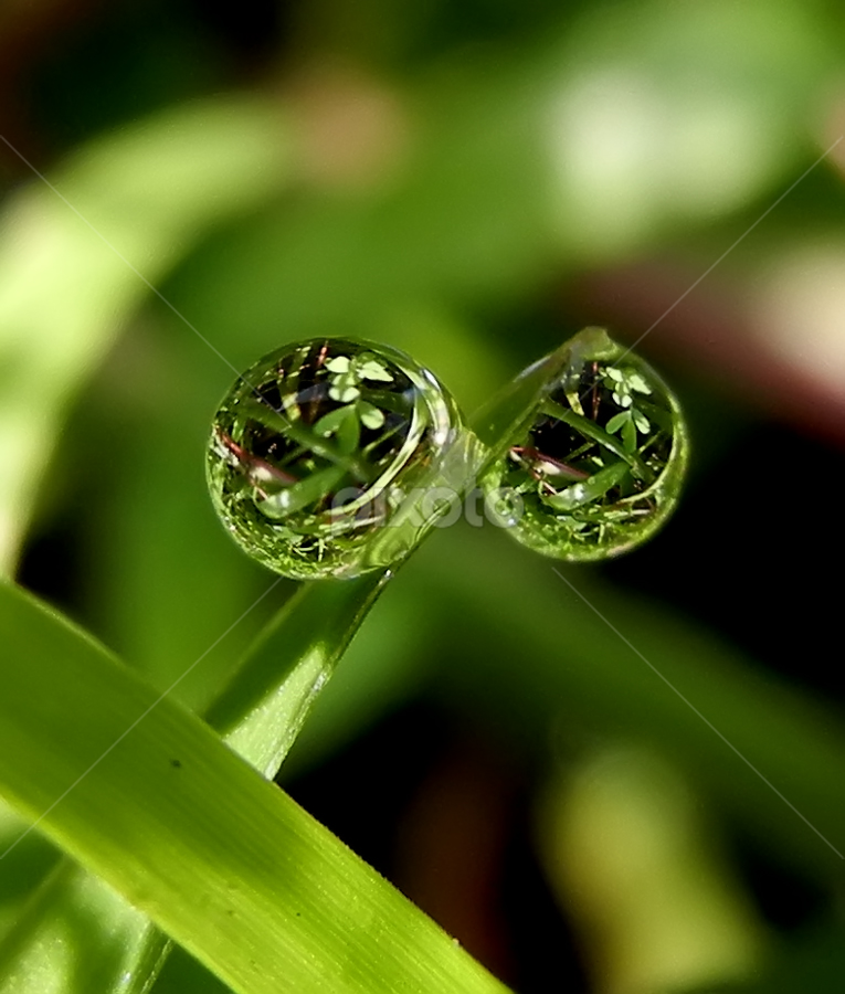 2 ball by Lalu Agus Suhardiman - Nature Up Close Water