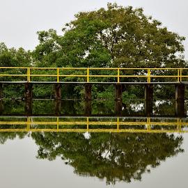 Bridge reflection by Gayan Mettananda - Nature Up Close Water ( reflection, bridge )