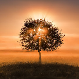 Eye of the tree by Alex Jitaru - Landscapes Sunsets & Sunrises