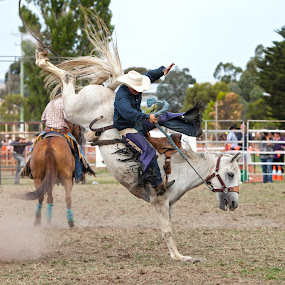 Bronco ride by Peter Cannon - Sports & Fitness Rodeo/Bull Riding ( canon, animals, cowboys, bulls, saddle bronco, horse, australia, rodeo, bronco )
