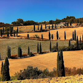 Z in Toscana by Gérard CHATENET - Landscapes Prairies, Meadows & Fields
