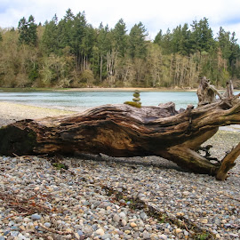 by Kathy Suttles - Landscapes Beaches