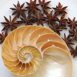 star anise by Adjie Tjokrosoedarmo - Artistic Objects Still Life ( seashell, sea, nautilus, star anise, beach )