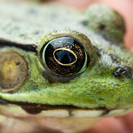 Froggy up close by Wilma Michel - Animals Amphibians