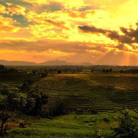 ROL On Karamabura by Erwan Setyawan - Landscapes Prairies, Meadows & Fields