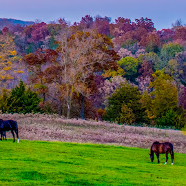 Fall in the country by Bill Phillips - Animals Horses ( farm, horses, fall colors, season, colors, landscapes )