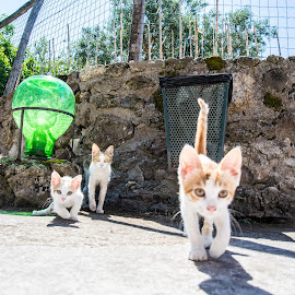 Not your turf by I M - Animals - Cats Kittens ( cats, territory, guard, ischia, turf, aragon, kittens, protect, serious )