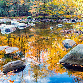 Reflections in the Water by Carol Ward - Landscapes Waterscapes ( tn, fall colors, autumn, great smoky mountains national park, reflections, trees, smoky mountains )