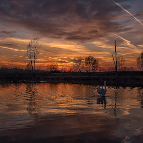 Sunset and swan by Vanja Vidaković - Landscapes Sunsets & Sunrises