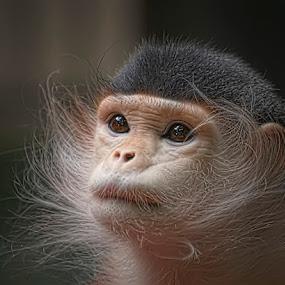Look by Cheri McEachin - Animals Other Mammals