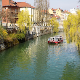 willows above the river by Marija Čaušić - City,  Street & Park  Street Scenes ( building, ship, street, willow, river )
