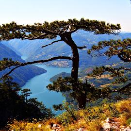Tara  by Suzana Jovanović - Landscapes Mountains & Hills ( national park, mountain, tree, viewpoint, landscape, river )