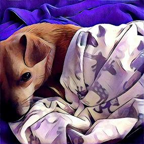 Wally by Amada Gonzalez - Digital Art Animals ( comfort, pet, digital art, fur baby, painting )