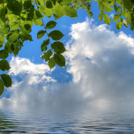 by Dipali S - Landscapes Waterscapes ( clouds, sky, ripples, background, reflections, landscape, leaves, skyscape )
