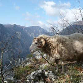 Ram Bekan by Bojan Matančić - Landscapes Mountains & Hills