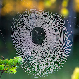 by Stanley P. - Nature Up Close Webs