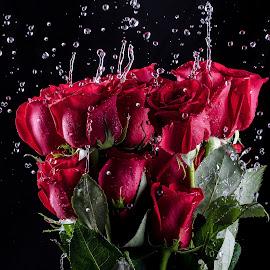 Rose boquet by Jim Harmer - Flowers Flower Arangements ( black background, water, rose, flash, macro, red, roses, boquet, flowers, close up, flower, close-up )