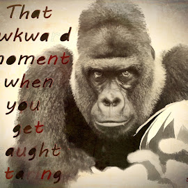 Staring by Sheen Deis - Typography Captioned Photos ( captions, silverback, gorilla )