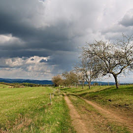 by Miroslava Winklerová - Landscapes Prairies, Meadows & Fields