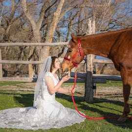 Bride and horse by Steve Densley - Wedding Bride ( wedding, brides, horse, wedding dress, bride, best female portraiture )