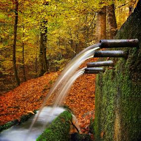 Akargider by Veli Toluay - City,  Street & Park  Fountains ( ağaç, yaprak, doğal, yosun, yedigöller milli parkı, su, sonbahar, orman, çeşme )