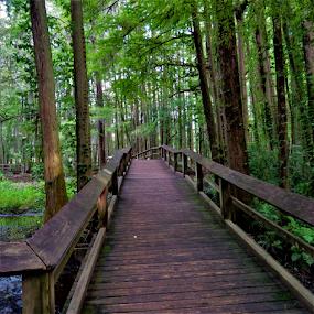 Swamp Bridge by Hal Gonzales - Buildings & Architecture Bridges & Suspended Structures ( wooden, plants, bridge, cyprus, swamp,  )
