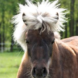 by John Fisher - Animals Horses
