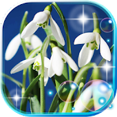 Free Snowdrops of Forest APK for Windows 8