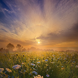 Echos The Sound Of Silence by Phil Koch - Landscapes Sunsets & Sunrises ( vertical, travel, yellow, sky, nature, weather, light, orange, colors, twilight, art, mood, journey, horizon, portrait, country, dawn, environment, season, horiz  ons, serene, outdoors, lines, natural, inspirational, wisconsin, ray, landscape, sun, photography, life, emotions, horizons, inspired, clouds, office, park, heaven, beautiful, scenic, living, morning, field, blue, sunset, amber, peace, meadow, summer, beam, sunrise, earth )