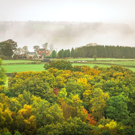 Foggy Morning by Darrell Evans - Landscapes Prairies, Meadows & Fields ( countryside, home, autumnal, grass, flora, green, house, leaves, landscape, country, yorkshire, autumn, fog, fall, outdoor, brown, mist )