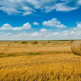 by Mirko Lazović - Landscapes Prairies, Meadows & Fields ( field, blue sky, sky, nature, green, wallpaper )
