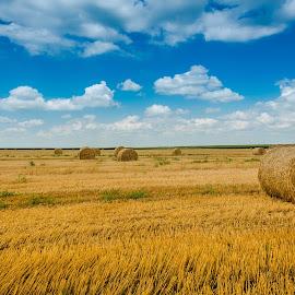 by Mirko Lazović - Landscapes Prairies, Meadows & Fields ( field, blue sky, sky, nature, green, wallpaper )