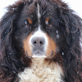by Enikő Langné Papp - Animals - Dogs Portraits