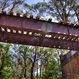 Decaying Railway Bridge by Ella Kingston - Buildings & Architecture Bridges & Suspended Structures ( scrub, train tracks, bush land, abandoned bridge, bush, railway bridge, abandoned )