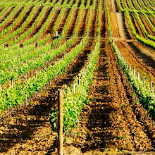 A tour of the exciting BAIRRADA wine region