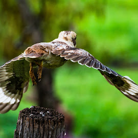 Lift Off! by Sarah Sullivan - Novices Only Wildlife