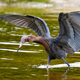 by Ruth Overmyer - Animals Birds