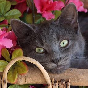 Smoky by Brenda Shoemake - Animals - Cats Kittens (  )