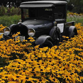driving thru by Kelvin Watkins - Transportation Automobiles ( old, bright, truck, shinny, yellow, flowers )