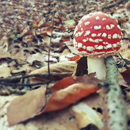 by Megi Šajn - Nature Up Close Mushrooms & Fungi ( red, foliage, white, nature, mushroom )