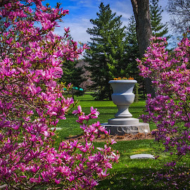 Purple Bushes Near the Moody Urn by Pat Lasley - City,  Street & Park  Cemeteries ( urn, graves, bushes, cemetery, trees )
