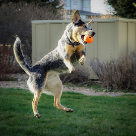 by Rick W - Animals - Dogs Playing