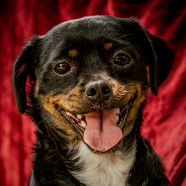 Opal by Myra Brizendine Wilson - Animals - Dogs Portraits ( canine, pet, opal, dog )